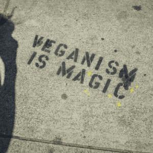 Zuecos Veganos para Hombre